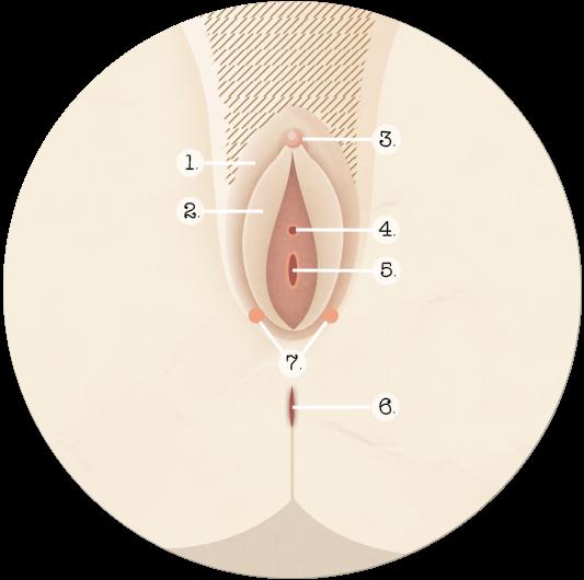 Frotter le clitoris au sang