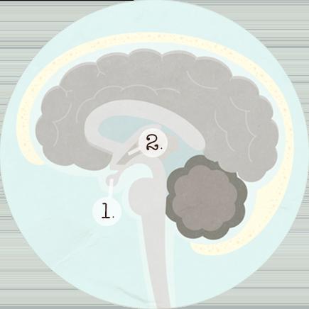 les-hormones-du-cycle-menstruel-interne